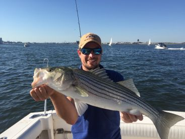 Stripped bass in Boston Harbor