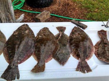 Fall flounder