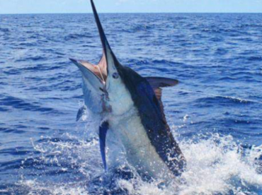 Apex Charters FL PCB, Tallahassee And Surrounding Areas To St.George Island