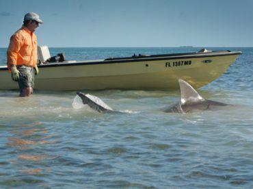 Miami Tarpon and Shark Fishing