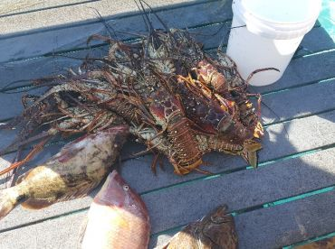 Combo lobster and groupers