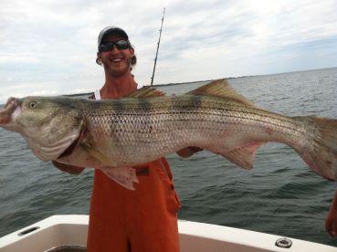Big Striped Bass