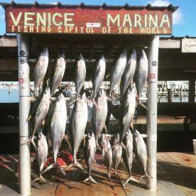 Louisiana Tuna Charters, Venice