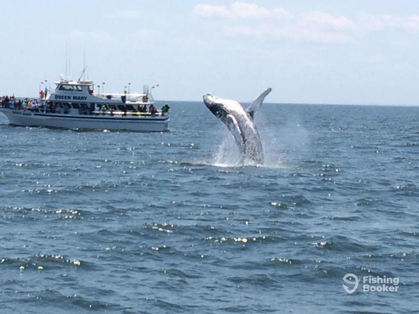 Queen mary open boat charters point pleasant beach nj for Point pleasant fishing