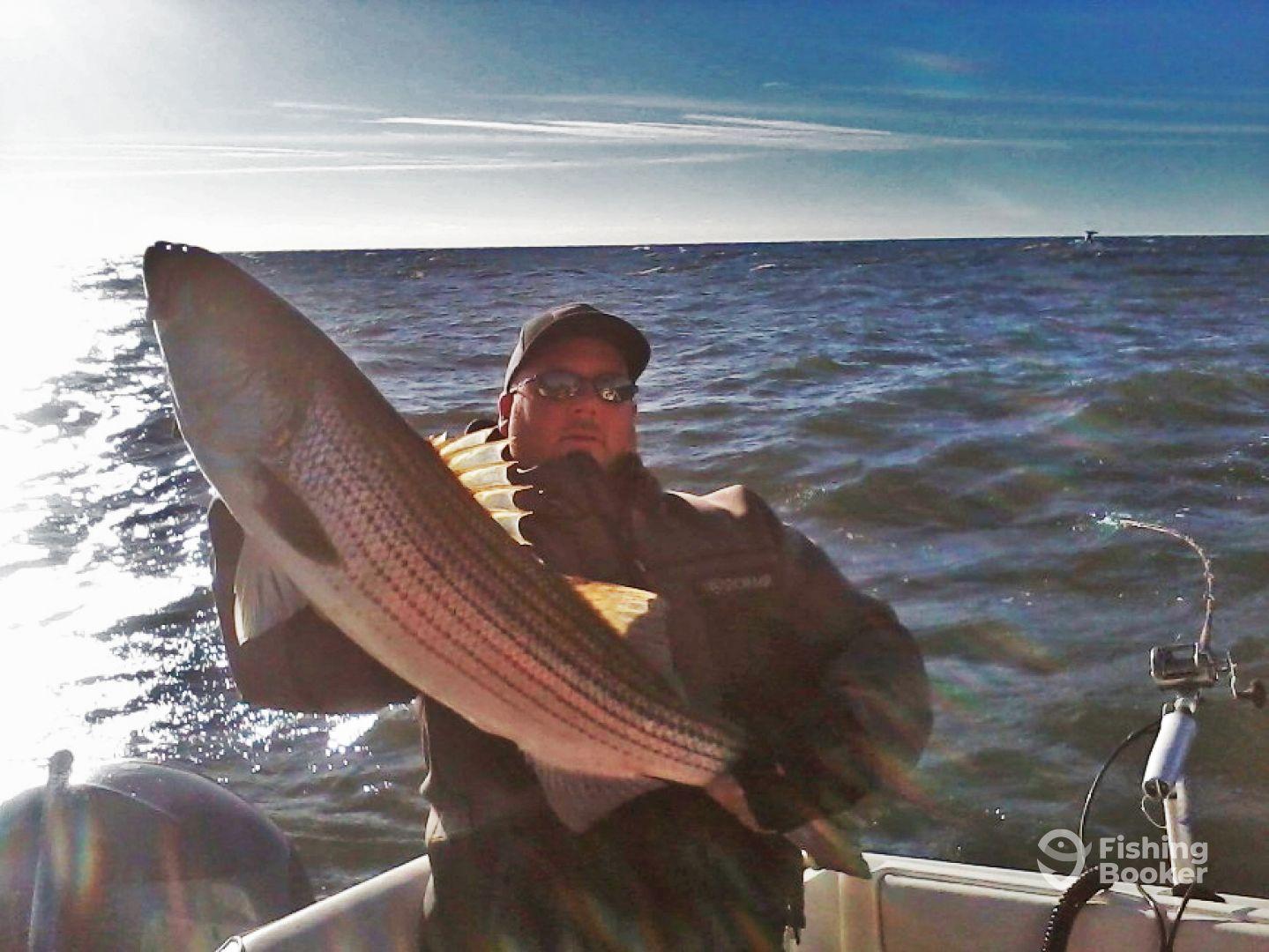 Trolling big striped bass