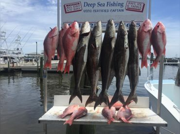 Opening Day of Snapper Season 2017
