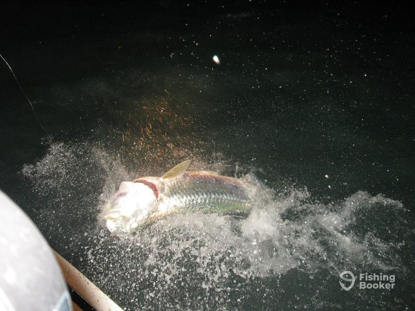 Big Tarpon going airborne just as the sun goes do