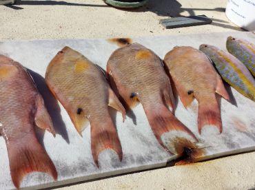 Hogfish, yummm!
