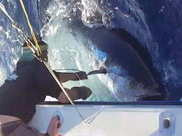Bluefin tuna !!!