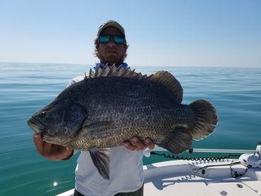 Huge Triple tail. best eating fish in the ocean
