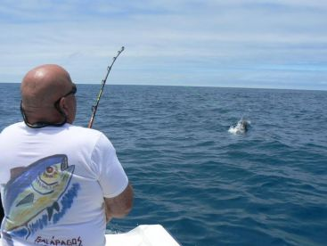 Striped marlin on light tackle