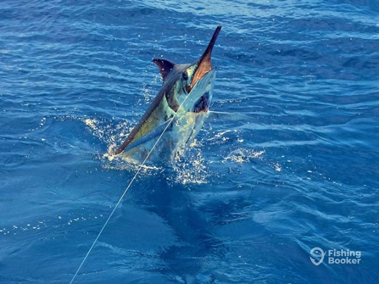 Grander marlin sportfishing kailua kona hi fishingbooker for Kona sport fishing