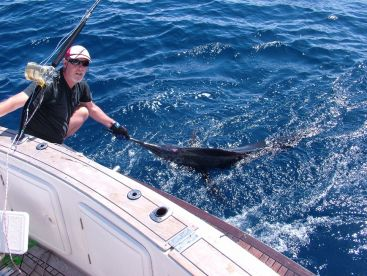 Stripped Marlin - Tag and Release