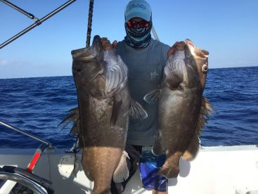 First drop of the day our client pulled up a double grouper sandwich!! 8/16