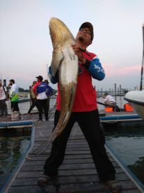 Huge cobia at the very last minute.