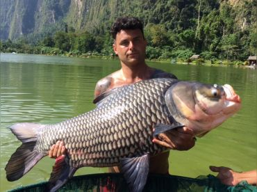 We have Siamese Carp available to well over 100lbs