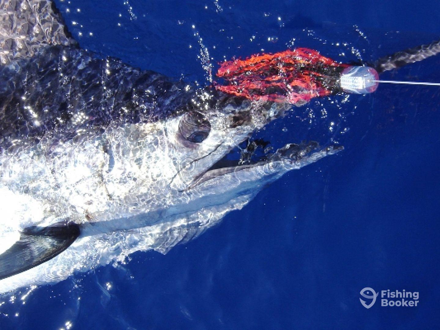 Ocean4You Offshore Fishing Charters