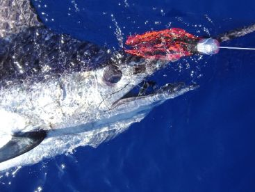 Ocean4You Offshore Fishing Charters