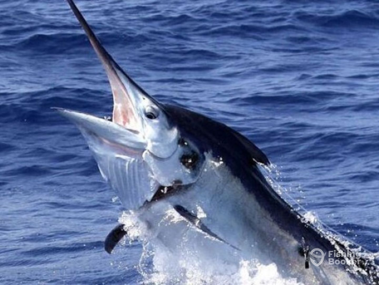 gold coast fishing charters reviews