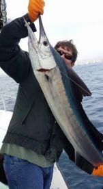 Healthy sailfish