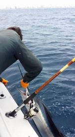 Sailfish caught on spinning tackle