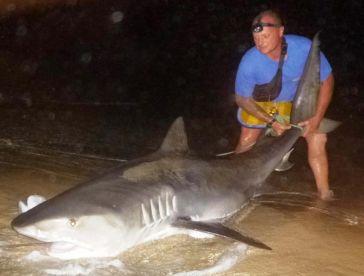 Shark Fishing Cape Verde, TIGER SHARK C&R
