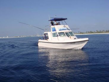 Sailing Tours Maldives - White Tern