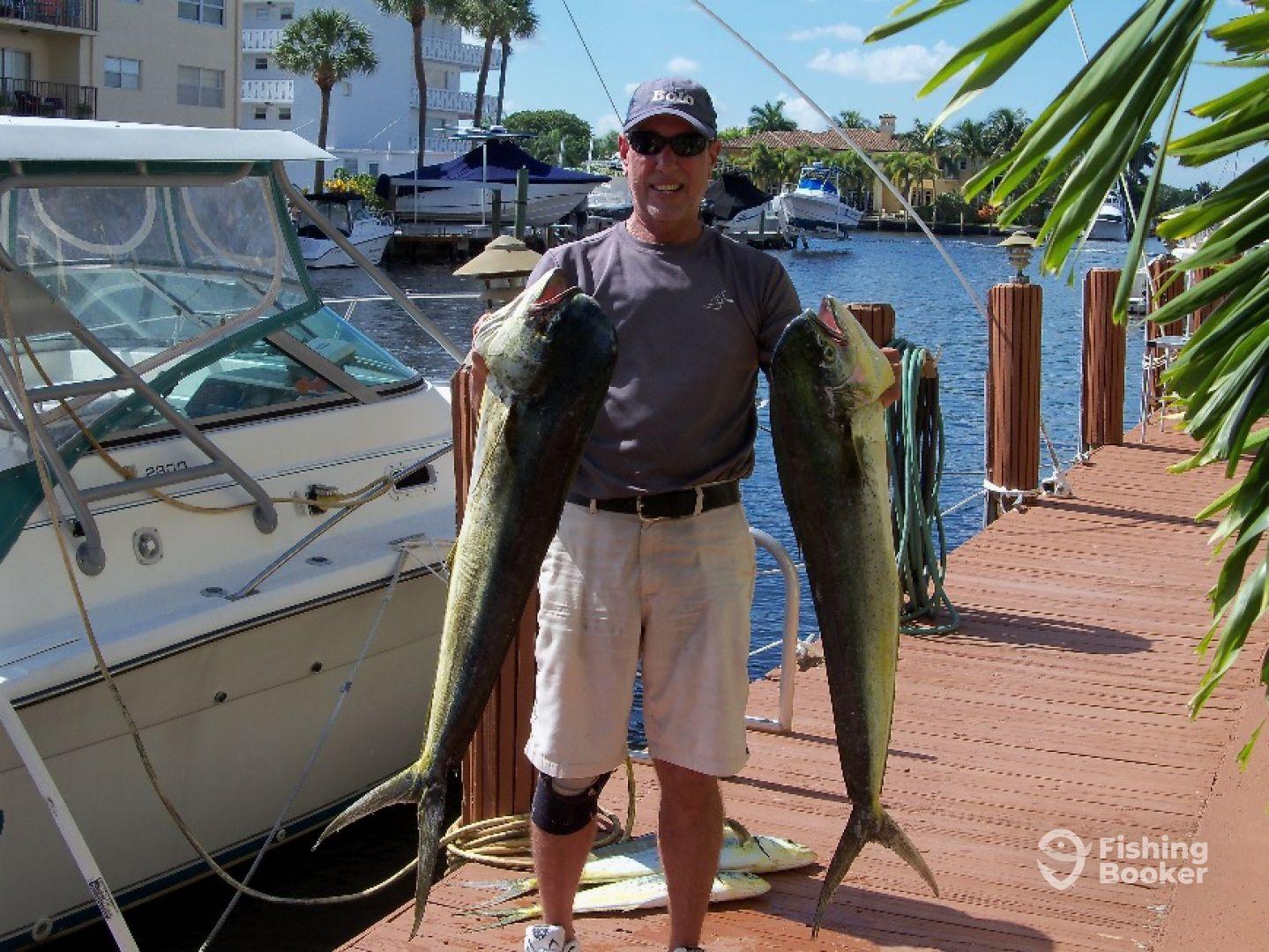 Doplin Fish, Mahi Mahi Fish, Florida Fishing Charters, Private Fishing Charters Trips Boynton Beach Inlet, Florida