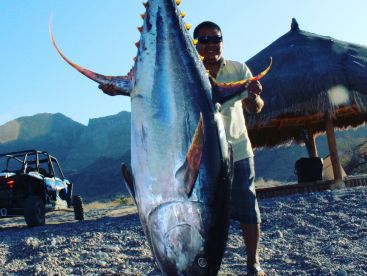 This is a world record yellowfin tuna caught with us earlier this year. 431.5 pounds!!!
