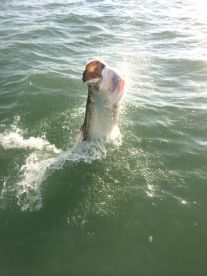 Tarpon season is march to August and exciting