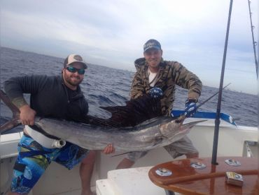 South Florida Sailfish