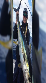 Yellowfin...