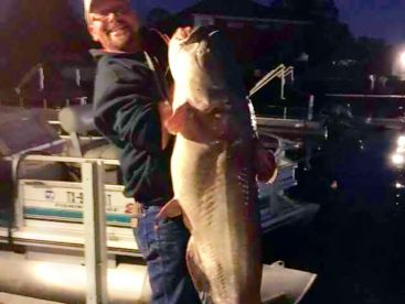 This is the unofficial lake record catfish 67lbs on rod and reel