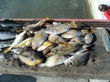 Schol Master Fish!!!
