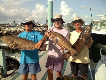 Tortugas groupers