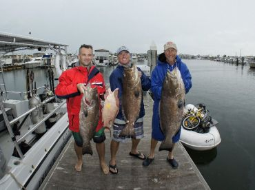 Grouper opening in the Marquesas