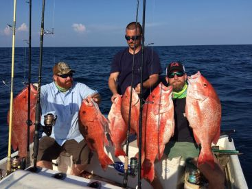 Red snapper all caught chummed up in the water