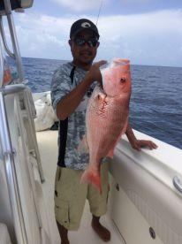 16 lb Red Snapper