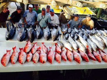 Red Snapper and Tuna