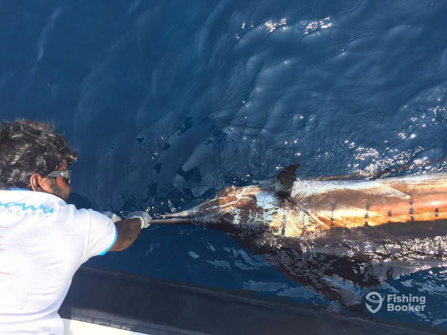 Sailfish Catch and Release