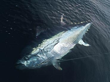 SHARKY BIG GAME FISHING DALMATIA, Tisno