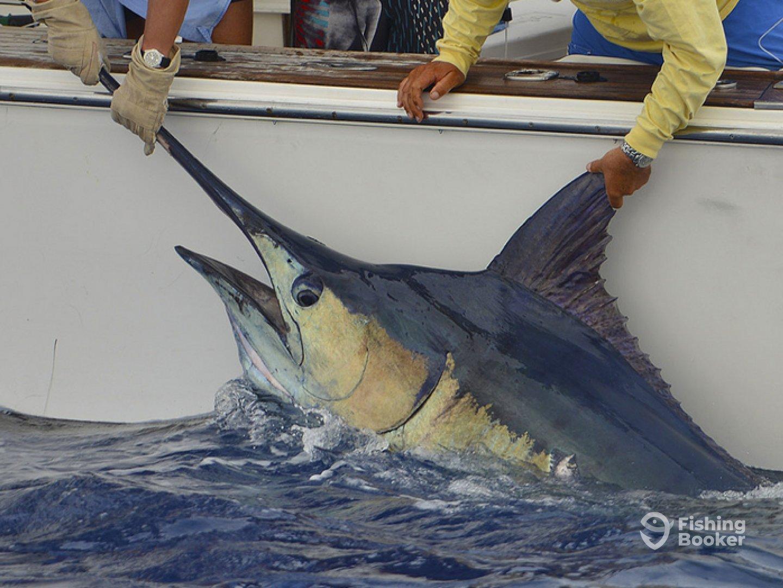 Brasilia Fishing Company—Nell Magic