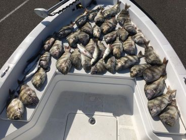 Sheepshead and Speckled Trout