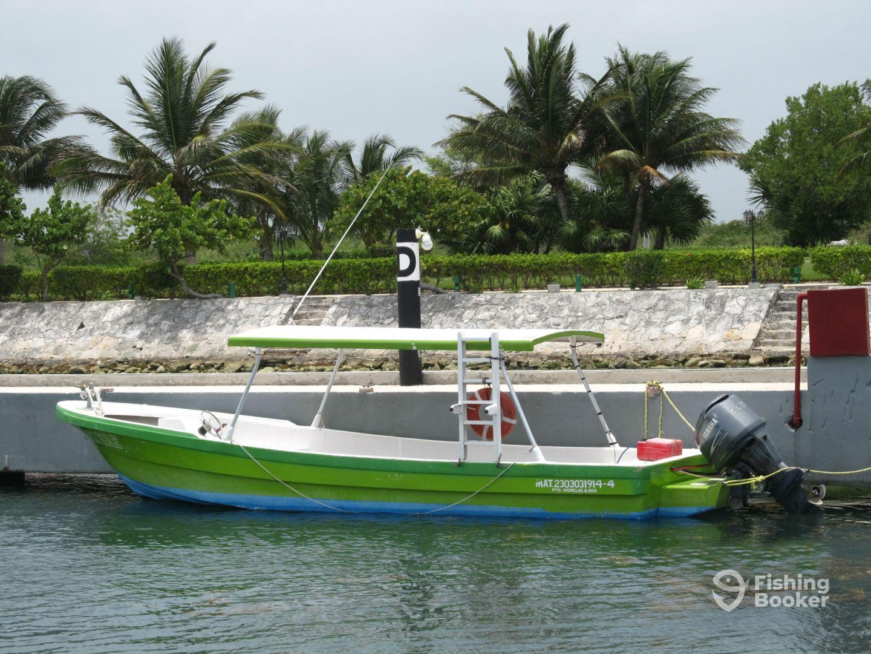 Diving puerto morelos national park puerto morelos for Puerto morelos fishing