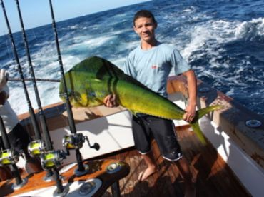 Big Dorado or Mahi-Mahi