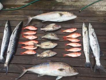 Coastal Ga Fishing - Midway