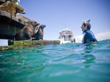 Moonraker Dolphin Swims, Sorrento