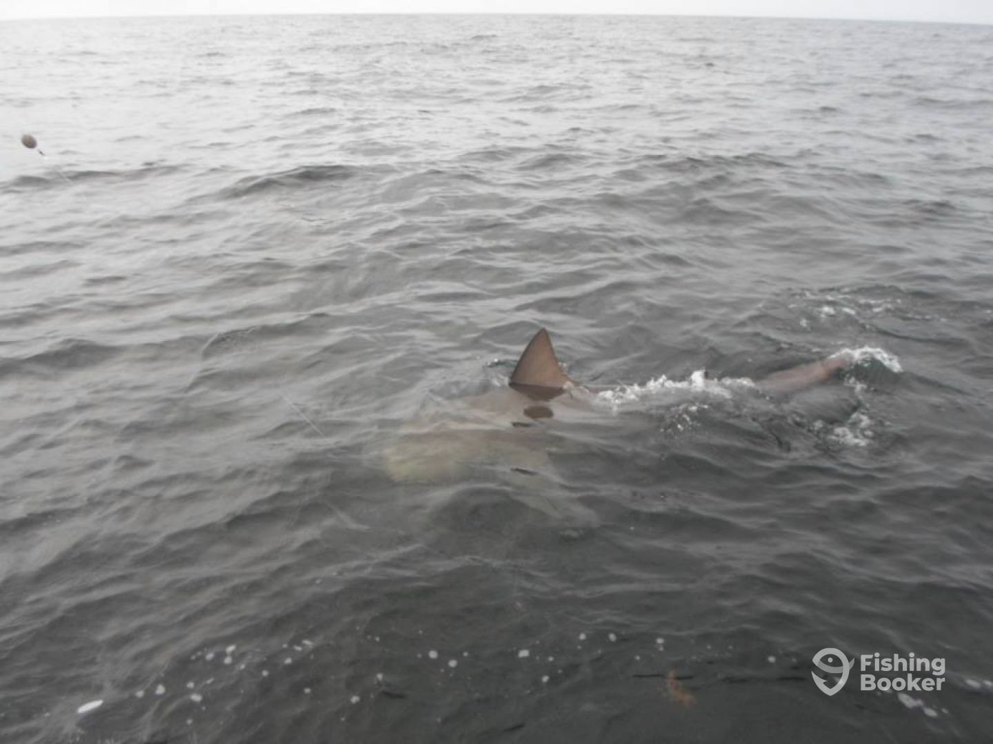 300lb Bull Shark caught and released