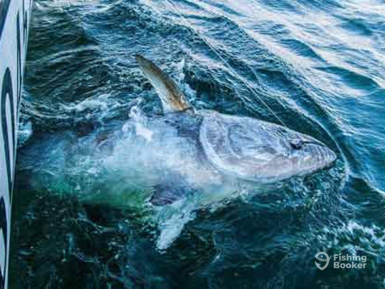 Reel Rush Tuna Charters