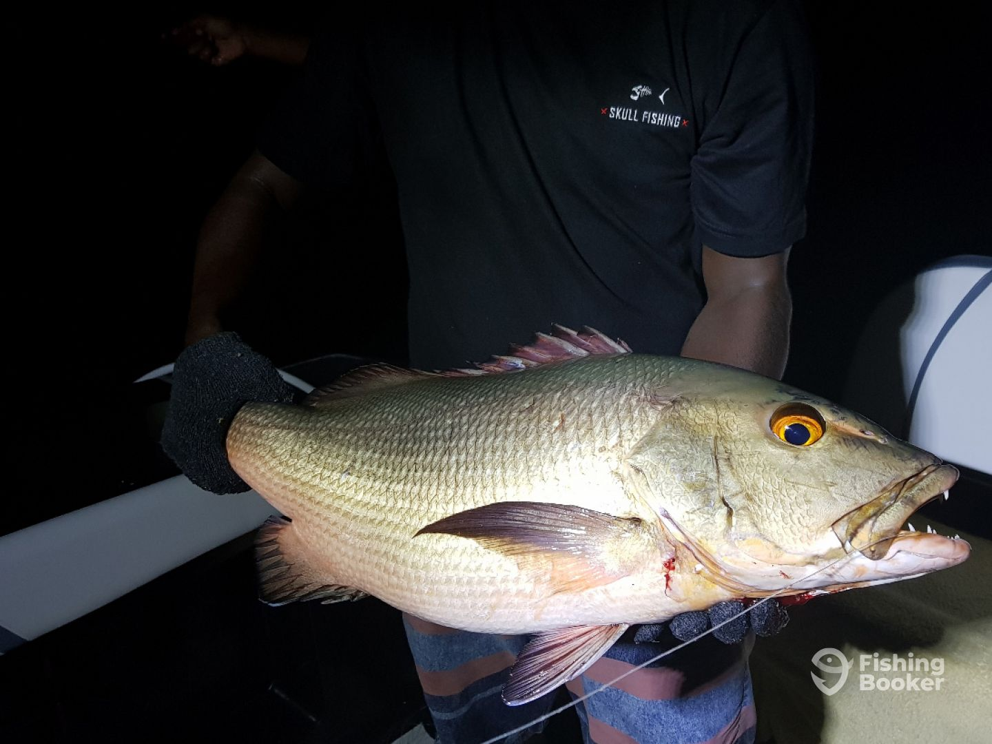 Red Snapper w/ Line Fishing (Night)
